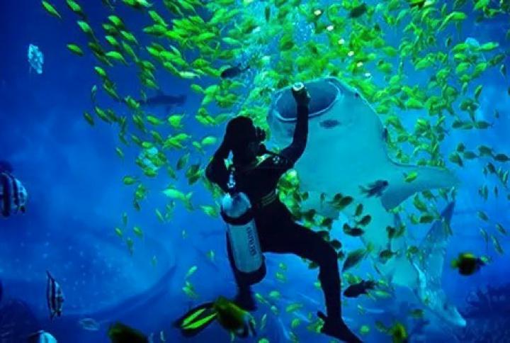 壁纸 海底 海底世界 海洋馆 水族馆 桌面 720_484
